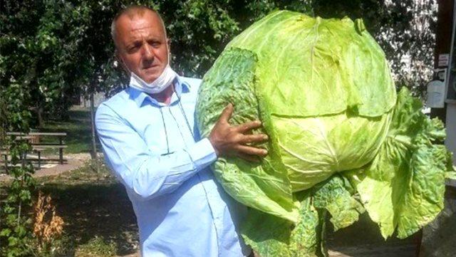 40 kilogramlık 'dev lahana' görenleri şaşırttı