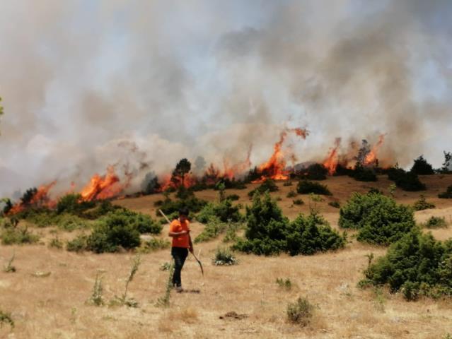 Bingöl'de orman yangını büyümeden söndürüldü