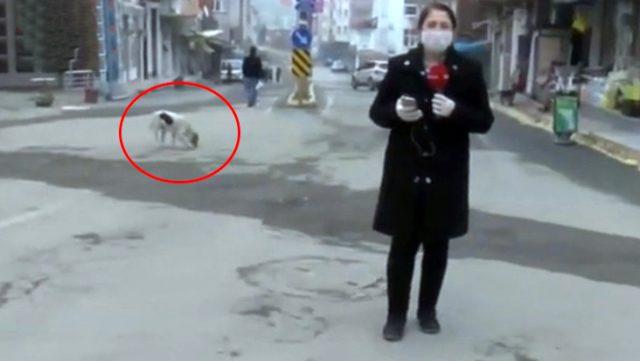 Canlı yayında karantina bölgesindeki durumu aktaran muhabir, oyun oynamak isteyen sokak köpeği sebebiyle zor anlar yaşadı