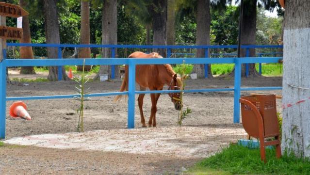 İBB'nin Hatay'a gönderdiği kayıp 100 atla ilgili kan donduran detaylar! Çiplerini çıkarmak için ameliyathane kurmuşlar - Gazete Demokrat - Gündem ve Son Dakika Haberleri