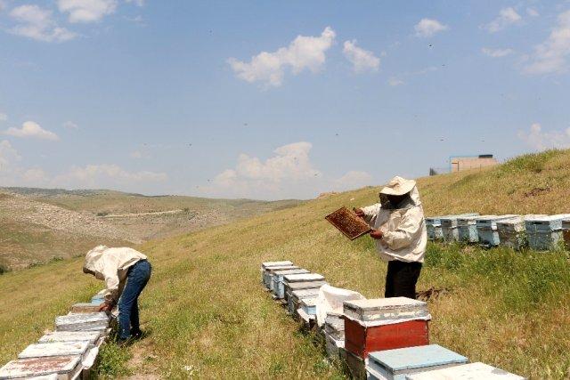 Kilosu 5 bin lirayı bulunca arıcılar propolis üretimine yöneldi