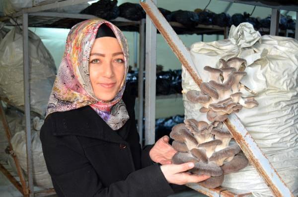 Köyüne dönüp mantar üreticisi oldu! Günde 1 saat çalışıp asgari ücretten fazla kazanıyor
