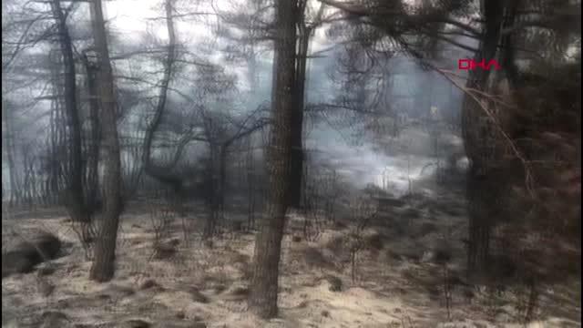 MANİSA Ahmetli'deki orman yangını kısmen kontrol altında