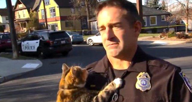 Polis memurunun üzerine atlayan kedi sosyal medyada yoğun ilgi gördü