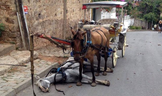 Son dakika: Büyükada'da 'at vebası' sonrası adaya hayvan giriş çıkışı yasaklandı