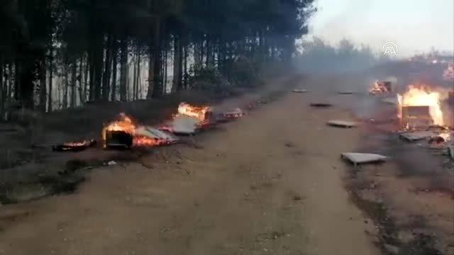 Son Dakika | Zeytinlik ve makilik alanda çıkan yangın ormana sıçradı (5)