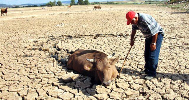 Türkiye son 9 yılın en kurak kasım ayını geçirdi